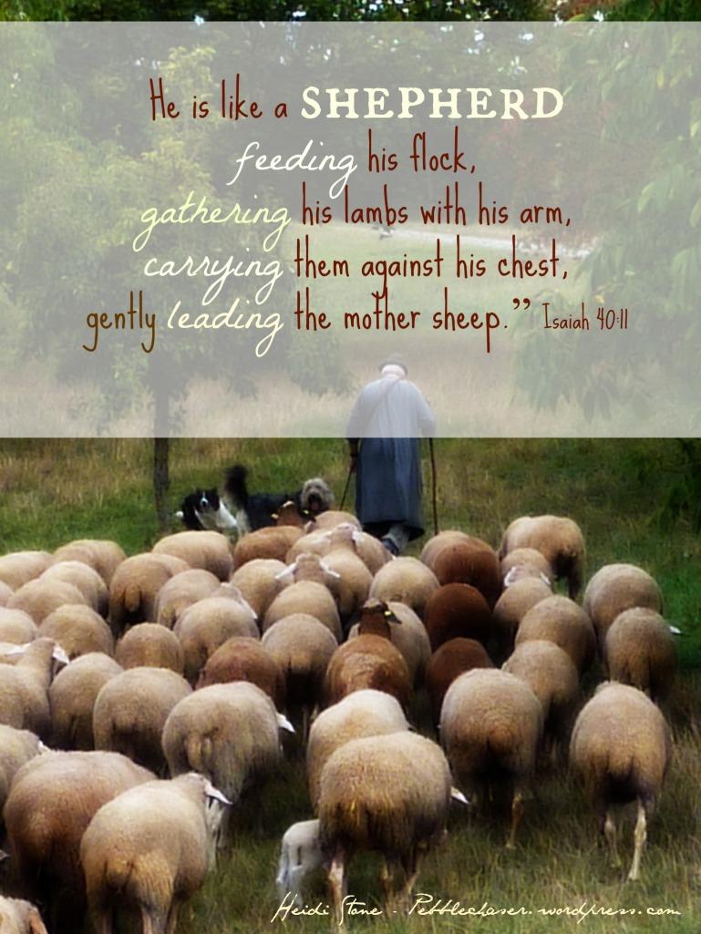 shepherd leading.jpg